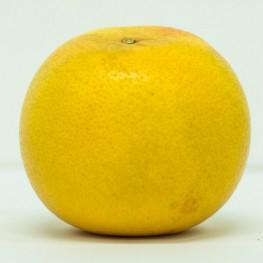 Pomelos (pamplemousse)